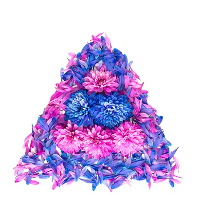 Blue and pink chrysanthemum flowers and petals are in shape of triangle.Isolated on white background