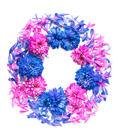 Blue and pink chrysanthemum flowers and petals are in shape of ring.Isolated on white background
