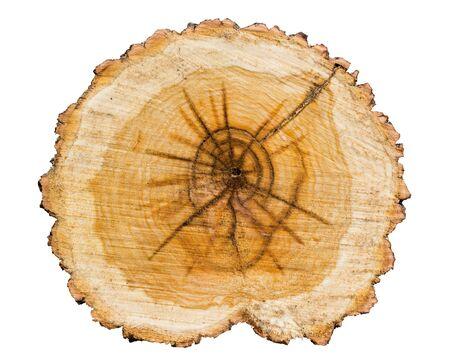 cronologia: Sección transversal del tronco de un árbol aislado en blanco anillos background.Annual