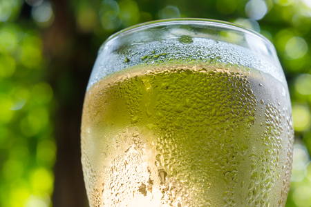 White wine is in sweaty wineglass.Blurred background of green foliage