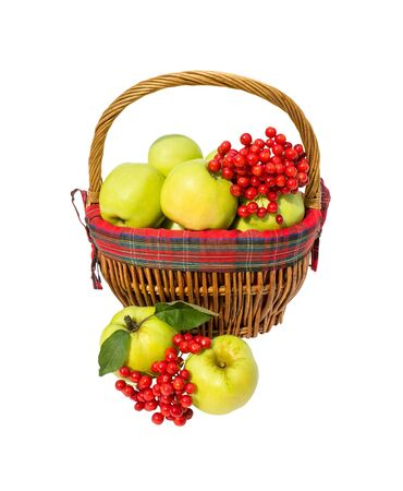 Apples and berry viburnum are in basket isolated on white background Stock Photo
