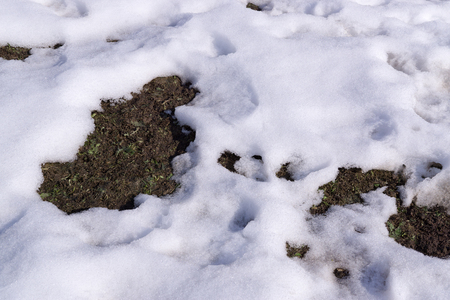Soil is visible through thawed patch in snow.Sunny day