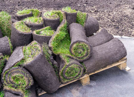 Rolled turf with grass lying in pile on wooden pallet