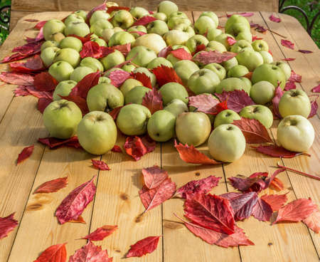 Ripe apples and red fallen leaves are lying on wooden table. Harvesting in orchard