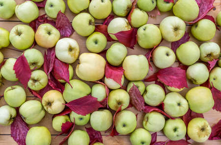 Ripe apples and red fallen leaves are lying on wooden table. Harvesting in orchard. Top of view Standard-Bild