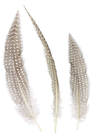 Different angles of the Pheasant feathers collection,Isolated on the white background
