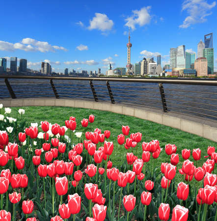 Red tulips prospects of Shanghai bund of Lujiazui Finance&Trade Zone at sunny skyline photo