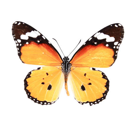 Orange and yellow butterfly isolated on a white background Stock Photo