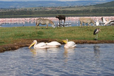 Wildlife At Lake Nakuru photo