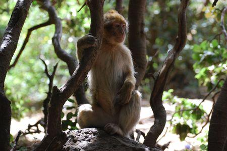 Monkey In shadow photo