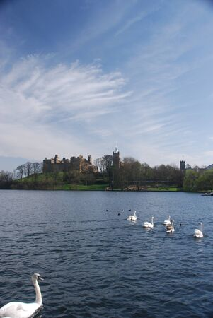 Swans and Linlithgow Palace photo