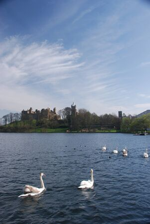 Linlithgow Palace and Swans photo