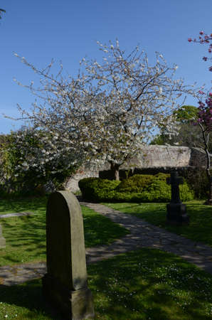 headstones: Blossoms and Headstones