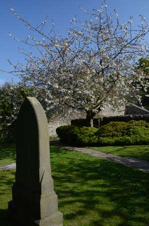 headstone: Headstone and Blossom