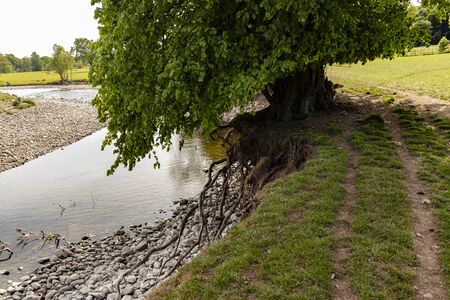 A Tree Teetering on the edge of a river bank.