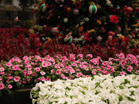Summer Christmas flower exhibition by the main streets of Sydney Australia