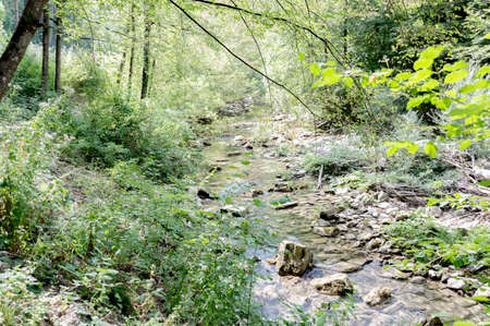 appennino: Italy, Tuscany, small river floating in a beautiful landscape on Appennino hills