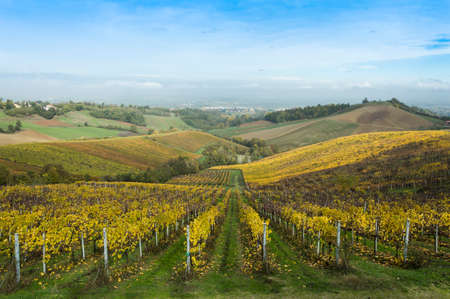 Countryside landscape with vineyards during fall season in rural Italy