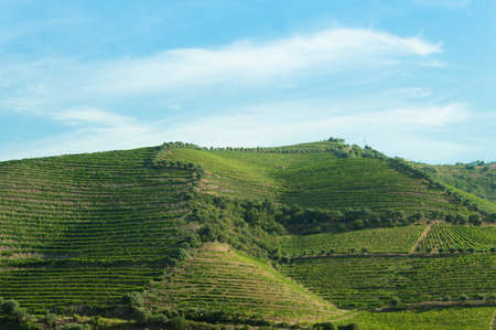 Countryside landscape and vineyards during summer season in Portugal