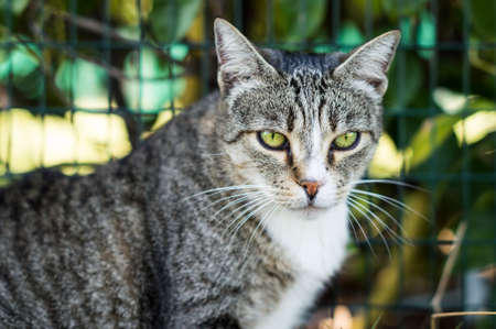 Closeup of a beauty cat sitting in front Stock Photo