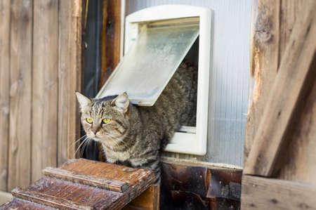 고양이는 고양이 플랩에서 탈출하여 밖으로 나간다.