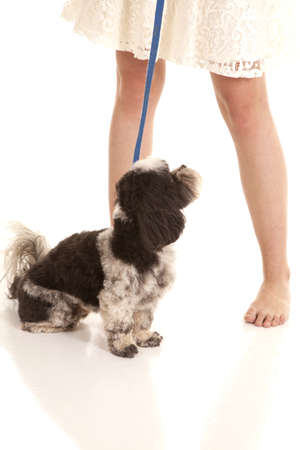 A womans legs and a dog on a leash. photo