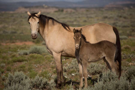 a mare horse next to her baby in the outdoors.