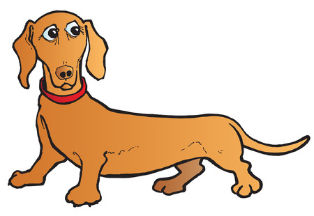 long tail: Dachshund Illustration