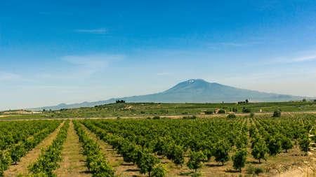 Oranje bomen boerderij in Sicilië, Italië. Sinaasappelen Vruchten Teelt onder de vulkaan Etna. Stockfoto