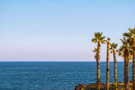 Summer 2020, palm trees with the blue sea in the background