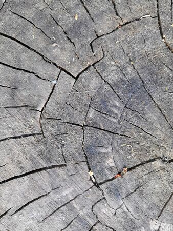 The surface texture of the stump of elm background Stockfoto