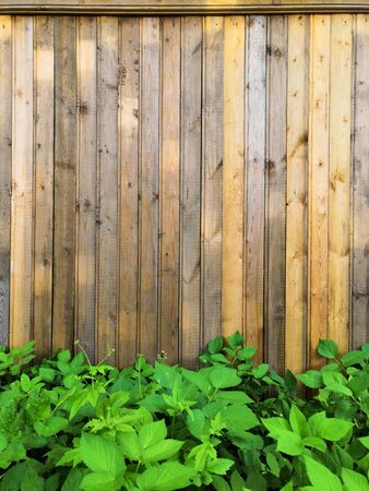 Beautyful garden plants leaves green foliage natural floral plant and grey brown wood fence in sunlight Background Stockfoto