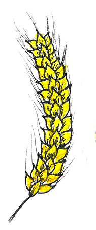 Beautiful stylized picture - a bright watercolor tall stacks of Golden yellow wheat for beer Oktoberfest drawing, isolated on white background. Hand drawn illustration for design menus cafe, bar.