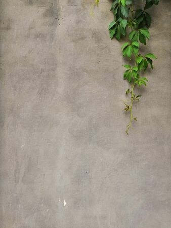 Grey Vintage Wall Background with Green Plant Leaves Close Up View. Old Aged Cement Gray Wall Texture, Rustic Grunge Pattern Backdrop with Uneven Concrete Cracked Wall and Green Leaf Empty Backdrop