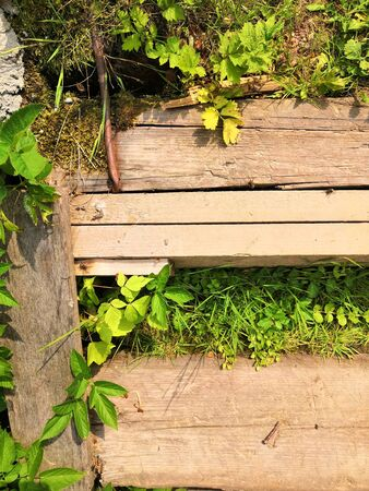 wooden steps, walkway, beautiful tropical garden with exotic plants and flowers. green floral background. Green plants on wooden steps Фото со стока