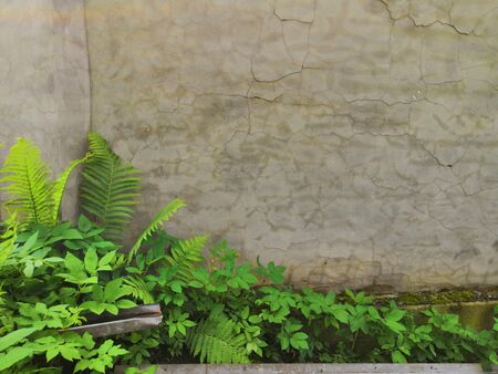 Green plants ferns on concrete wall background. Green fern leaf against a gray concrete wall. Wallpapers for your desktop. op view, place for text, close up. Фото со стока