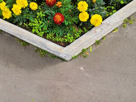 Beautiful blooming round stone vase flowerbed surrounded by asphalt pavement. Top view background Фото со стока