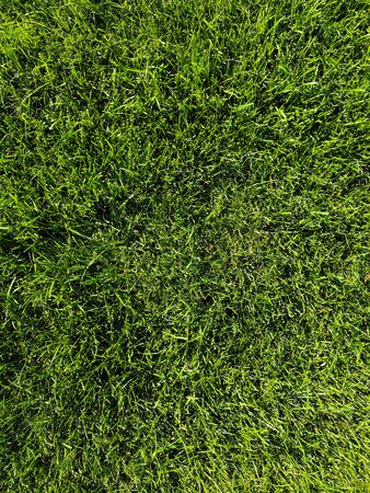 Green grass background texture. Golf or football field. Background and texture of green grass pattern from golf course. Фото со стока