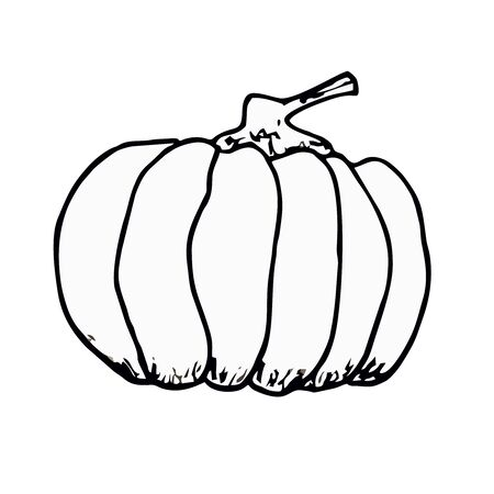 Vector outline drawing of Halloween pumpkin. Hand drawn sketch of garden vegetable. Doodle illustration of seasonal autumn crop harvesting. Isolated contour image