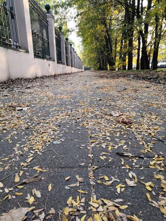 Road in the Park with autumn leaves. Beautiful romantic alley in a park with colorful trees, autumn landscape