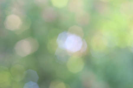 녹색 Bokeh 배경