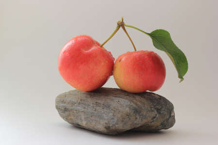 crab apple tree: Crabapples on a Rock Stock Photo