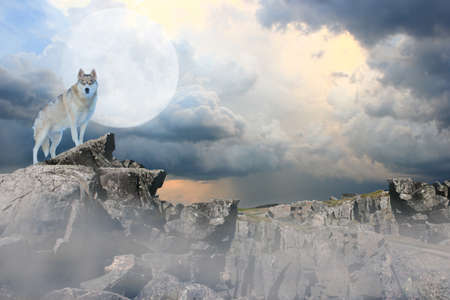 Wolf standing on a mountian under a full moon. Standard-Bild