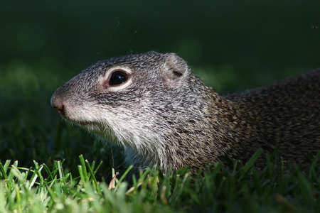nuthouse: Squirrel in the grass