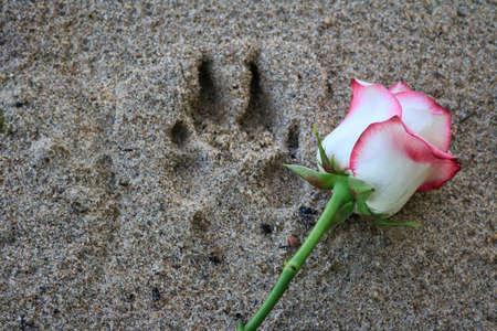 핑크 발 비치 모래에서 인쇄 발을 옆에. 스톡 콘텐츠