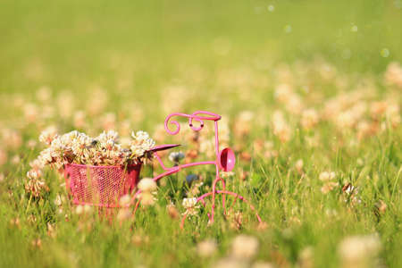 Clover flowers in the basket of a pink tricycle in the spring grass. Stock Photo