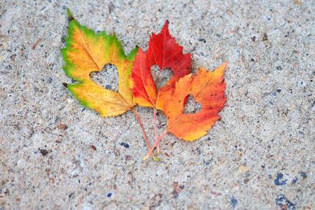 Buntes Herbstlaub mit einer Herzform schnitt aus der Mitte heraus Standard-Bild - 87208175