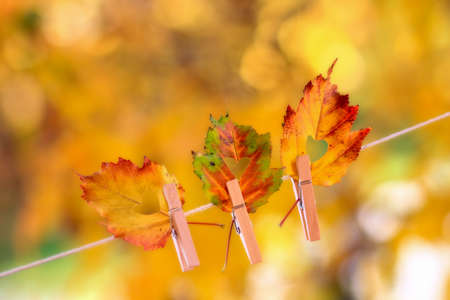 Colorful autumn leaves with a heart shape cut hanging on a clothesline by a clothespin 免版税图像