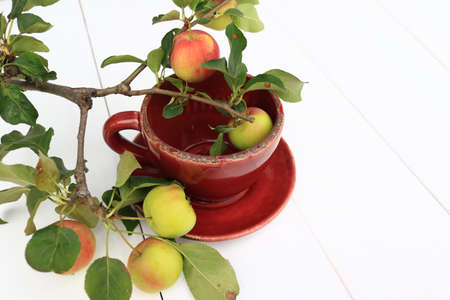 Branch of delicious organic crabapples in a cup isolated on a white background Stock Photo
