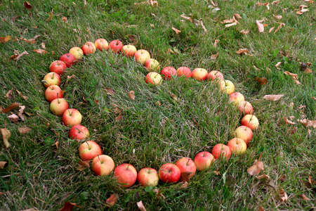 crab apple tree: Crabapples placed in a heart shape in the grass